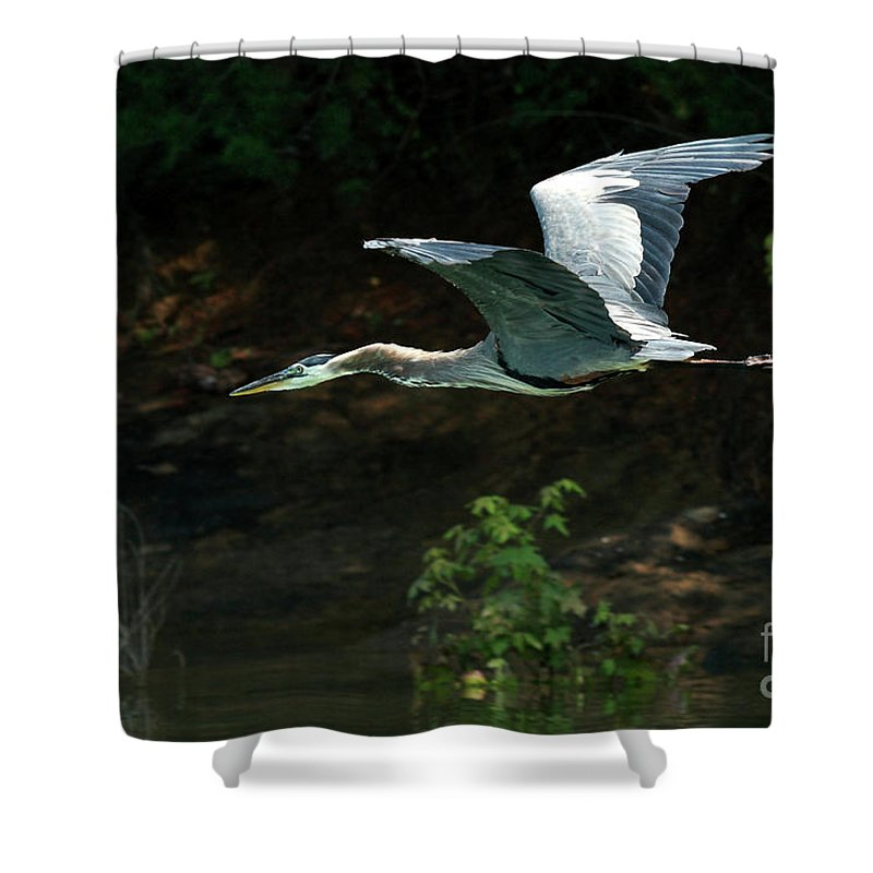 Heron Shower Curtain featuring the photograph Great Blue Fly-by II by Douglas Stucky