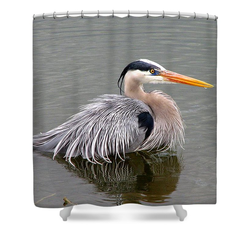 Bird Shower Curtain featuring the photograph Great Blue Heron 3 by J M Farris Photography
