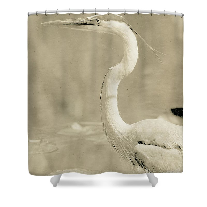 Bird Shower Curtain featuring the photograph Great Blue Heron Alternate Processed by John Harmon