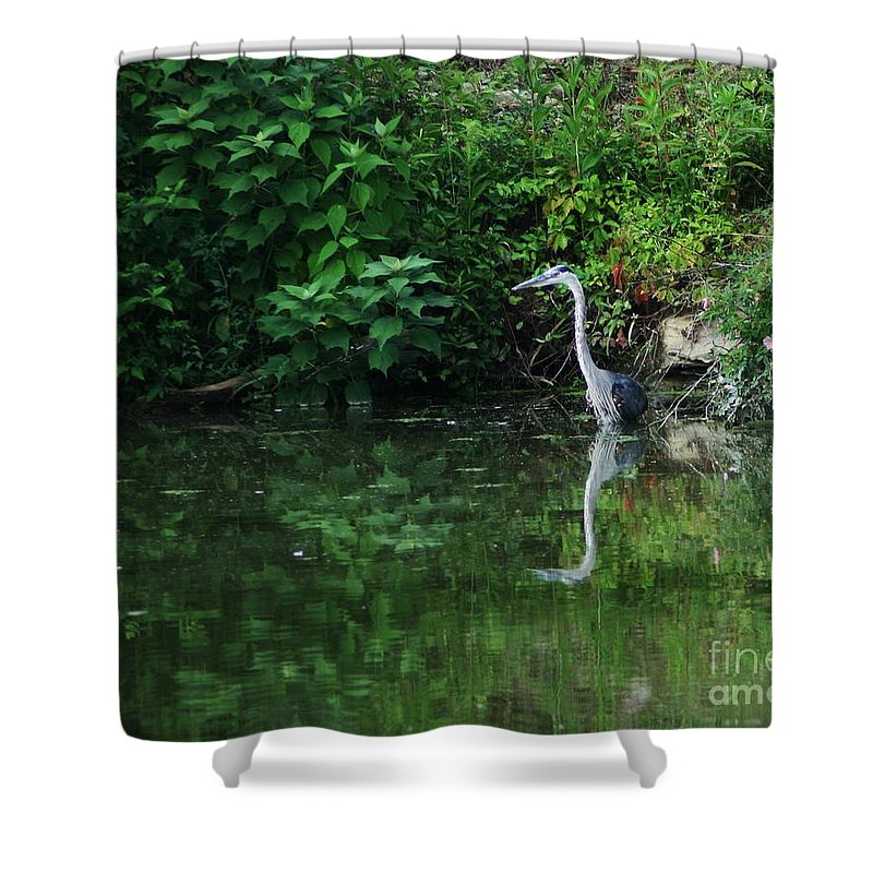 Lanscape Water Bird Crane Heron Blue Green Flowers Great Photograph Shower Curtain featuring the photograph Great Blue Heron Hunting Fish by Dawn Downour