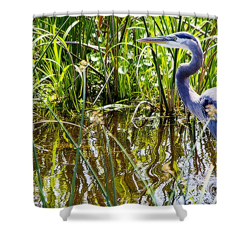Great Blue Heron Shower Curtain featuring the photograph Great Blue Heron In The Wetlands by Roger Wedegis