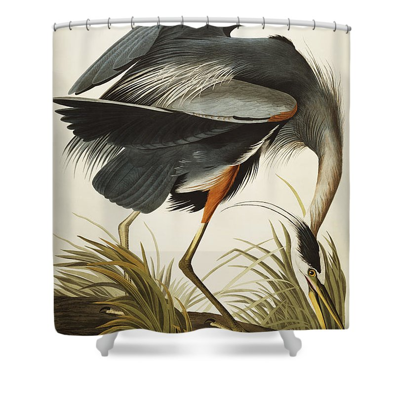 Great Blue Heron (ardea Herodias) Plate Ccxi From 'the Birds Of America' (aquatint & Engraving With Hand-colouring) By John James Audubon (1785-1851) Shower Curtain featuring the drawing Great Blue Heron by John James Audubon