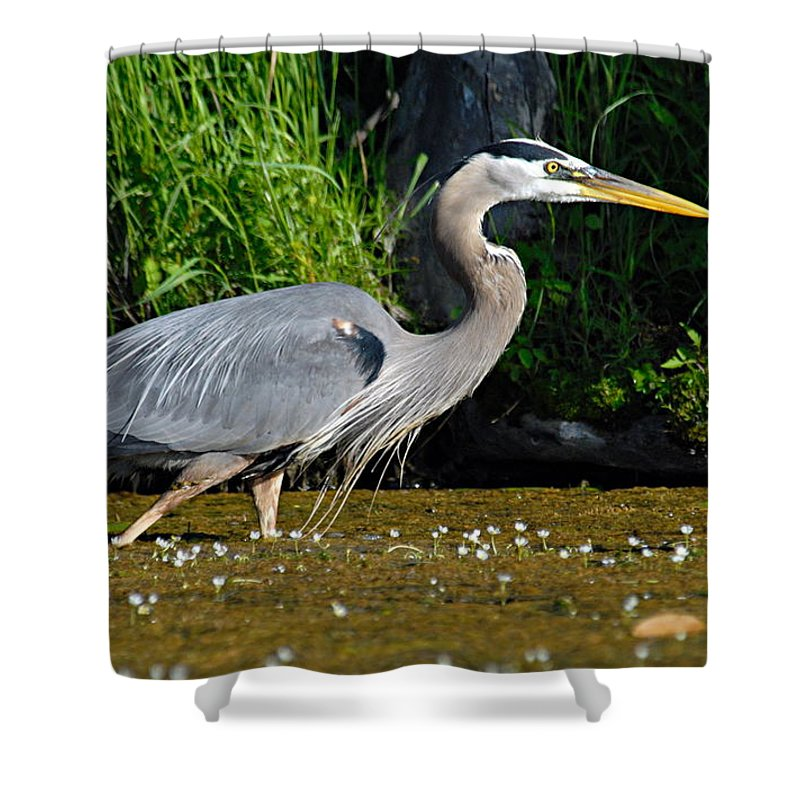Great Blue Heron Shower Curtain featuring the photograph Great Blue Heron by Larry Ricker