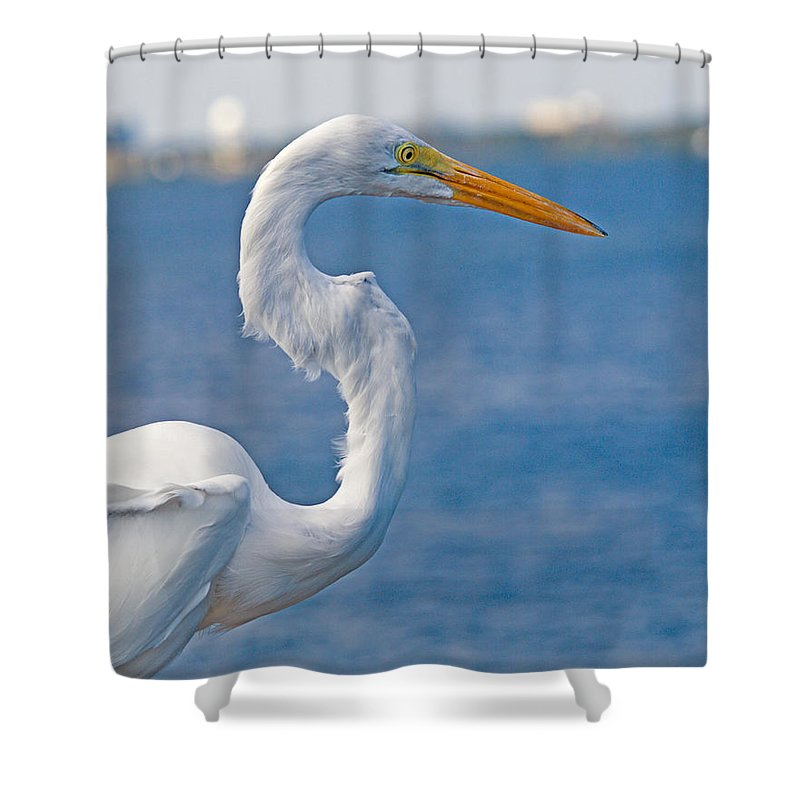 Great; Egret; Ardea; Alba; Bird; Seabird; Ocean; Indian; River; Lagoon; Sea; Melbourne; Beach; Breva Shower Curtain featuring the photograph Great Egret At Melbourne Beach by Allan Hughes