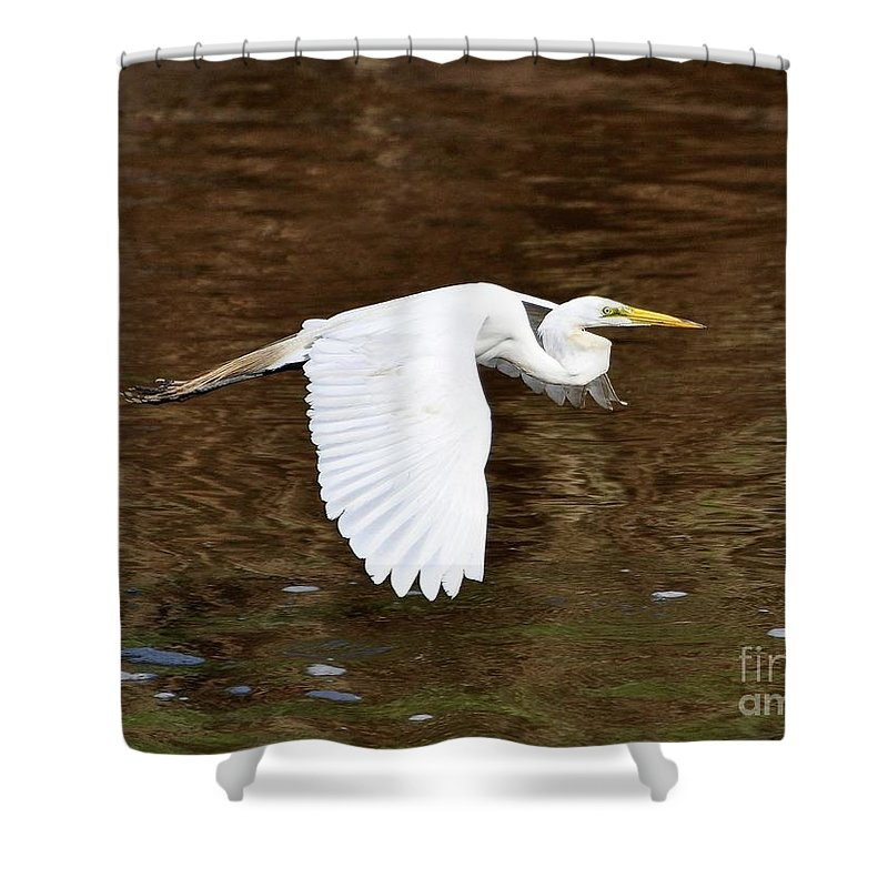 Great Egret Shower Curtain featuring the photograph Great Egret In Flight by Al Powell Photography USA