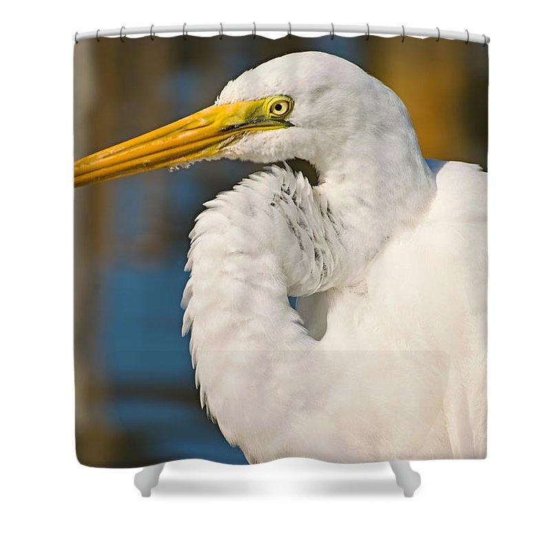 Bird Shower Curtain featuring the photograph Great Egret by Terry Wieckert