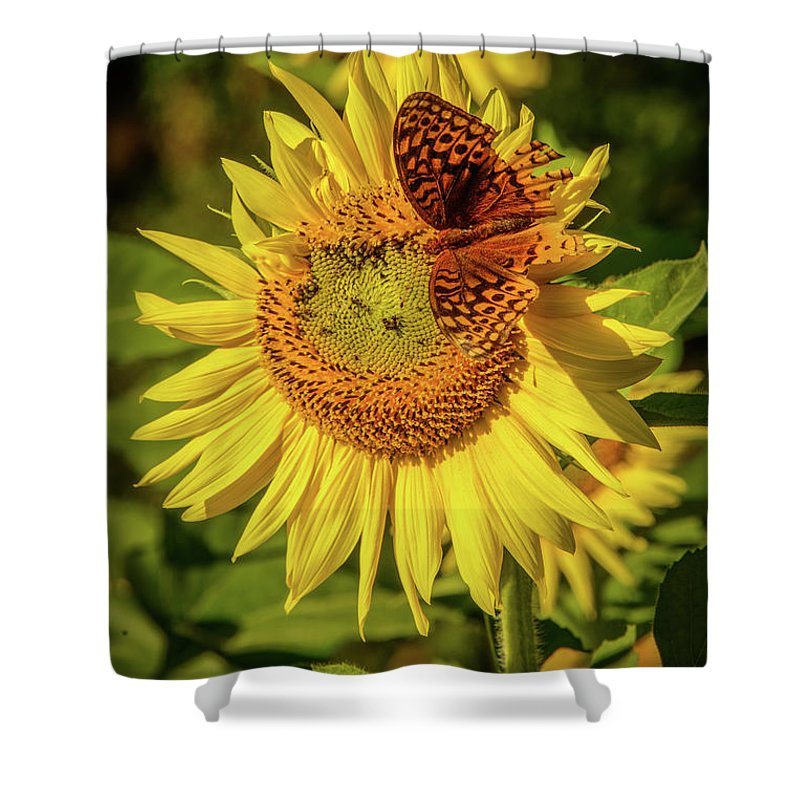 Fausett Sunflower Farm Shower Curtain featuring the photograph Great Spangled Fritillary On Sunflower by Charlie Choc