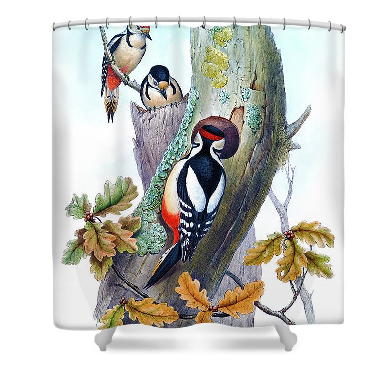 Woodpecker Shower Curtain Featuring The Painting Great Spotted Antique Bird Print John Gould Hc Richter