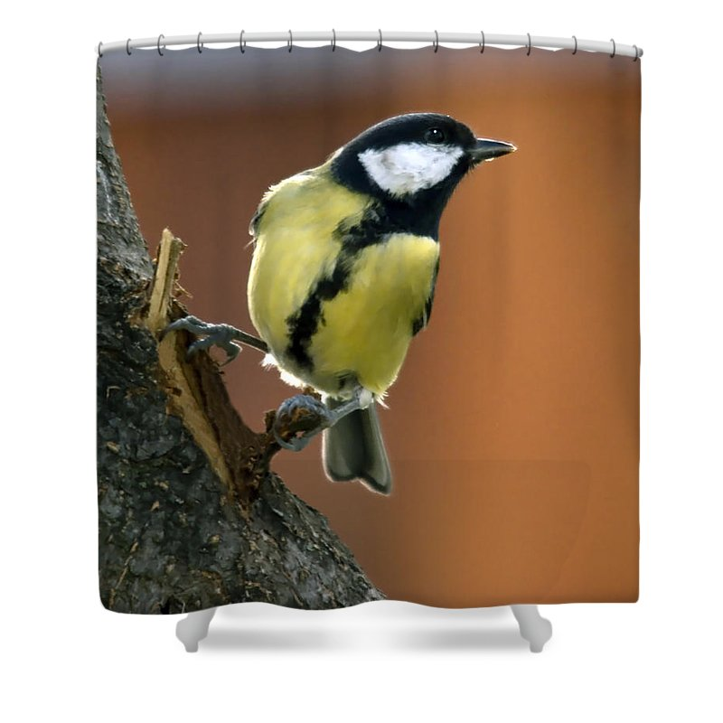 Great Tit Shower Curtain featuring the photograph Great Tit by Cliff Norton