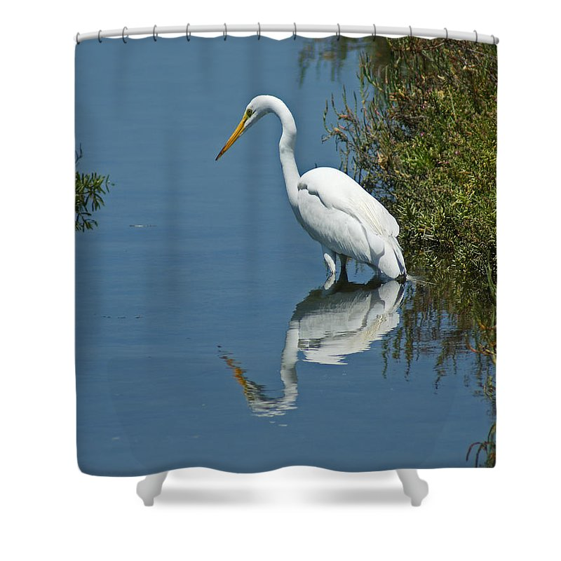 Birds Shower Curtain featuring the photograph Great White Egret by Ernie Echols