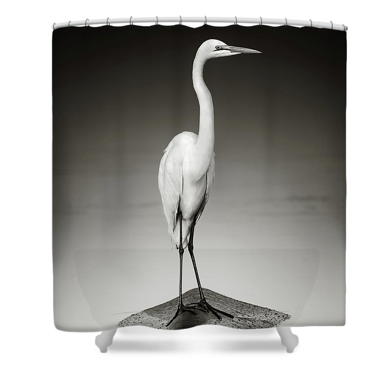 Egret Shower Curtain featuring the photograph Great white egret on Hippo by Johan Swanepoel