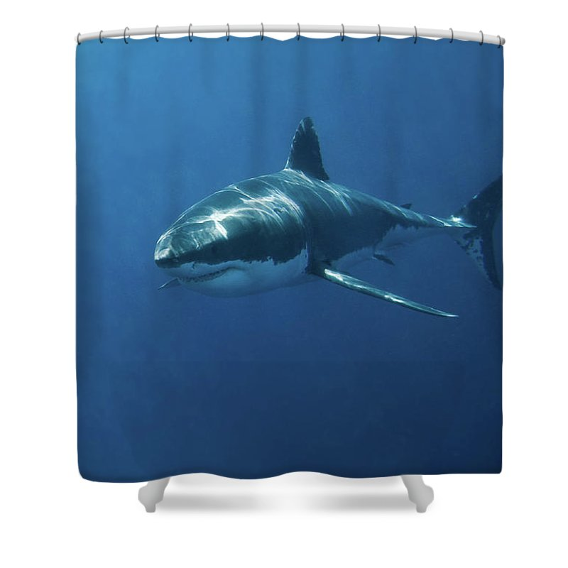 Sharks Shower Curtains