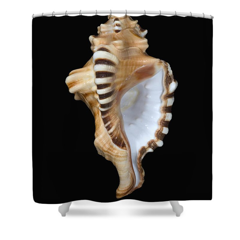 Animal Art Shower Curtain featuring the photograph Great White Tooth by Dave Fleetham - Printscapes