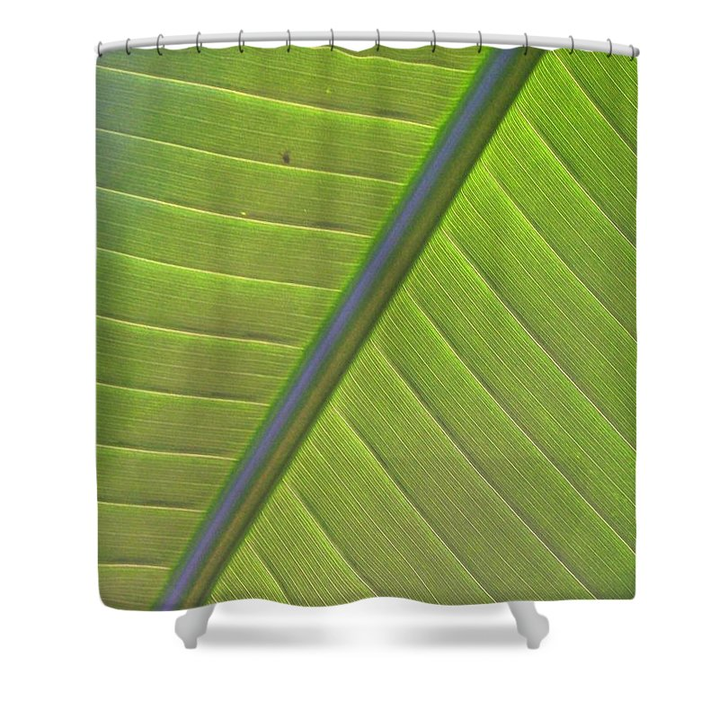Leaf Shower Curtain featuring the photograph Green And Purple Pattern by Laurie Paci
