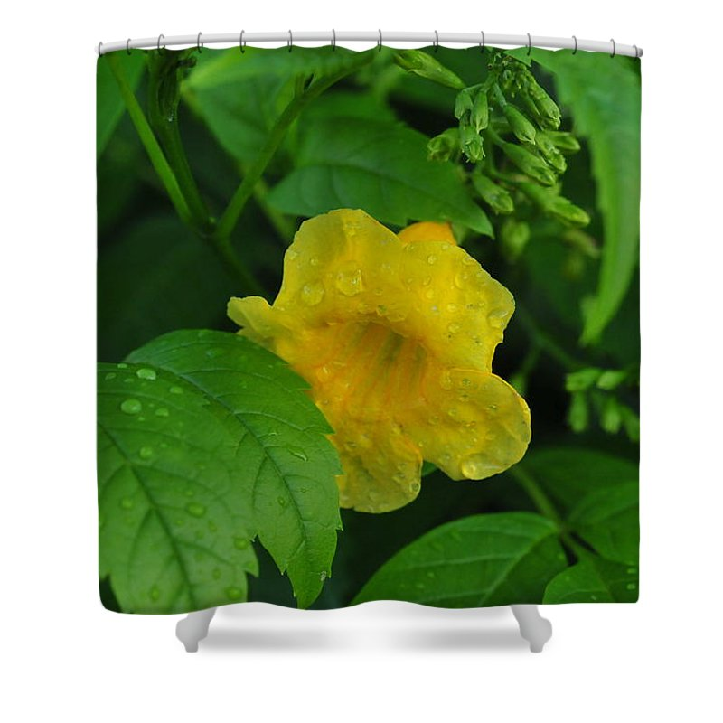 Flower Shower Curtain featuring the photograph Green And Yellow by Brigitta Diaz
