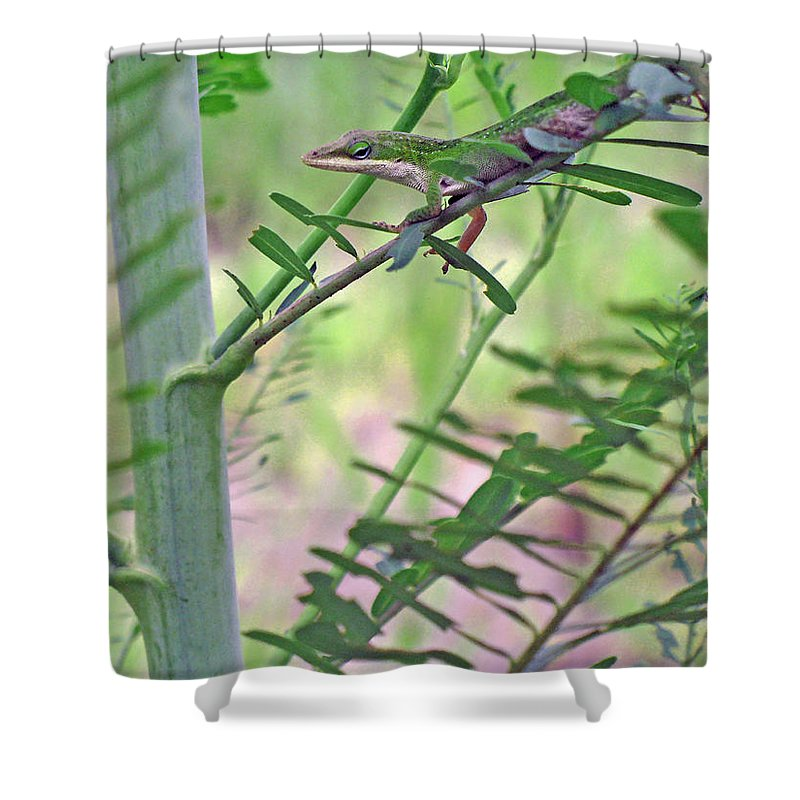 Anole Shower Curtain featuring the photograph Green Anole by Kenneth Albin