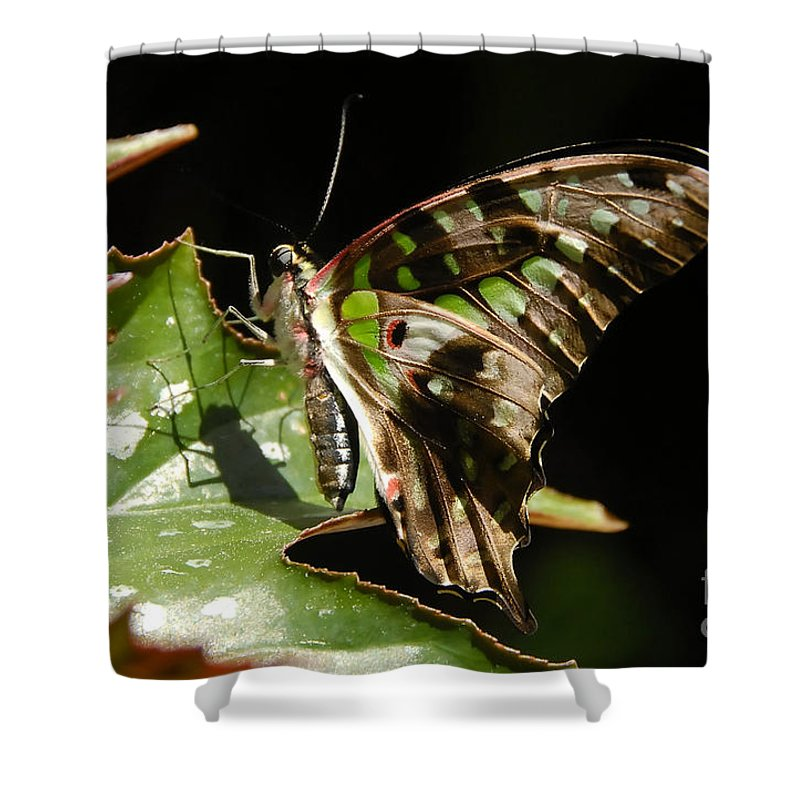 Butterfly Shower Curtain featuring the photograph Green Checkered Skipper by David Lee Thompson