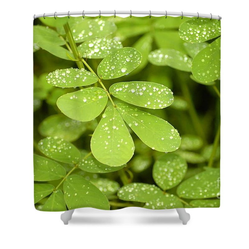 Green Shower Curtain featuring the photograph Green by David Lee Thompson