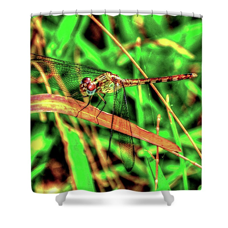 Dragonfly Shower Curtain featuring the photograph Green Dragonfly by Randy Aveille
