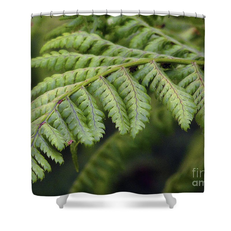 Fern Shower Curtain featuring the photograph Green Fern by Kim Tran