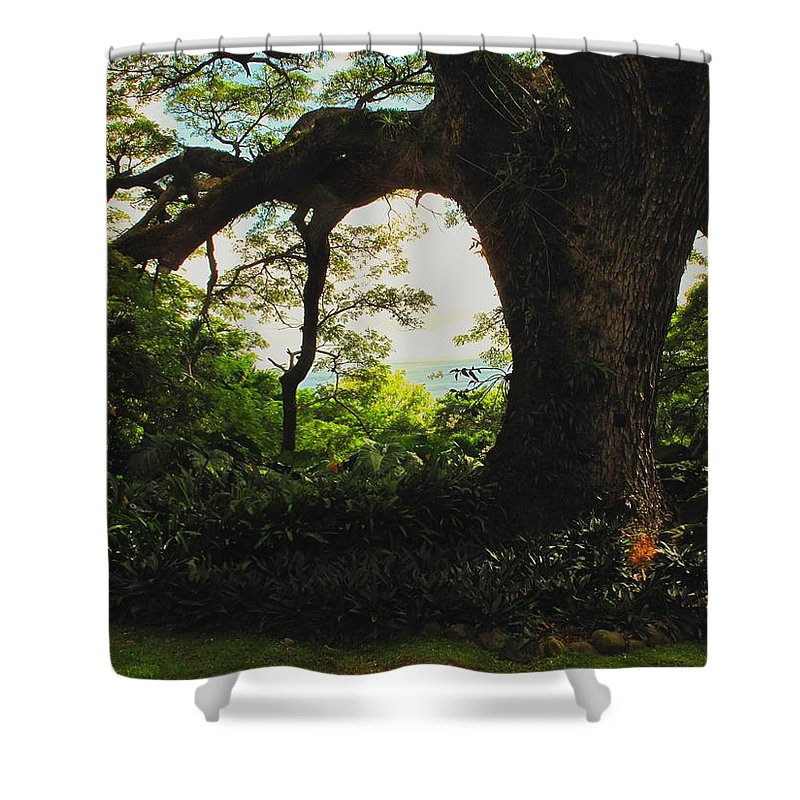 Tropical Shower Curtain featuring the photograph Green Giant by Ian MacDonald