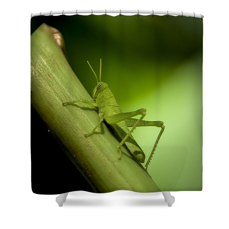 6. Style Or Process Shower Curtain featuring the photograph Green Grasshopper by Rich Governali