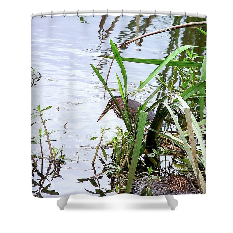 Little Green Heron Shower Curtain featuring the photograph Green Heron by Al Powell Photography USA