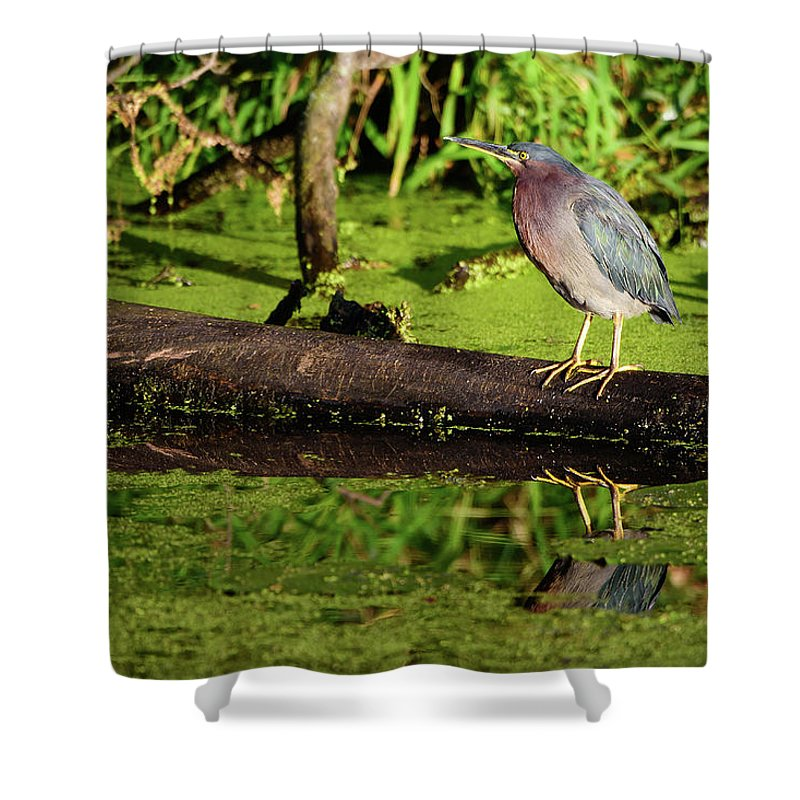 Heron Shower Curtain featuring the photograph Green Heron by Leo Cumings