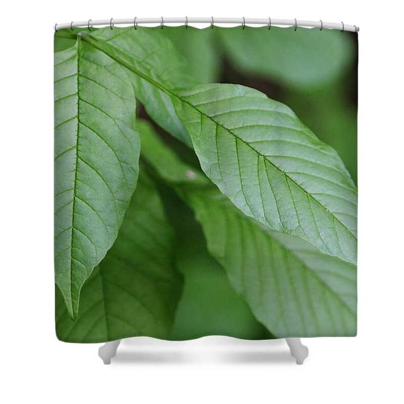 Nature Shower Curtain featuring the photograph Green Leafs by Malik Avunduk