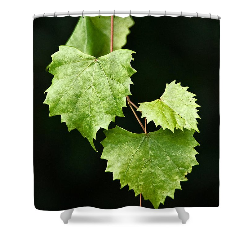 Flora Shower Curtain featuring the photograph Green Leaves by Christopher Holmes