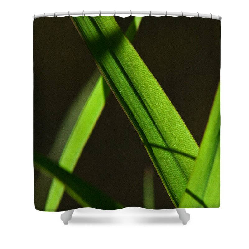 Green Shower Curtain featuring the photograph Green Leaves In Sunlight by Martha Johnson