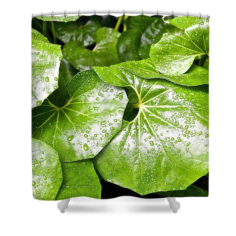 Green Leaves Shower Curtain featuring the photograph Green Leaves Longwood Garden by Mark Holden