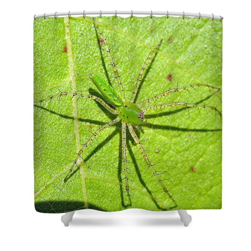 Spider Shower Curtain featuring the photograph Green Lynx Spider by Kenneth Albin