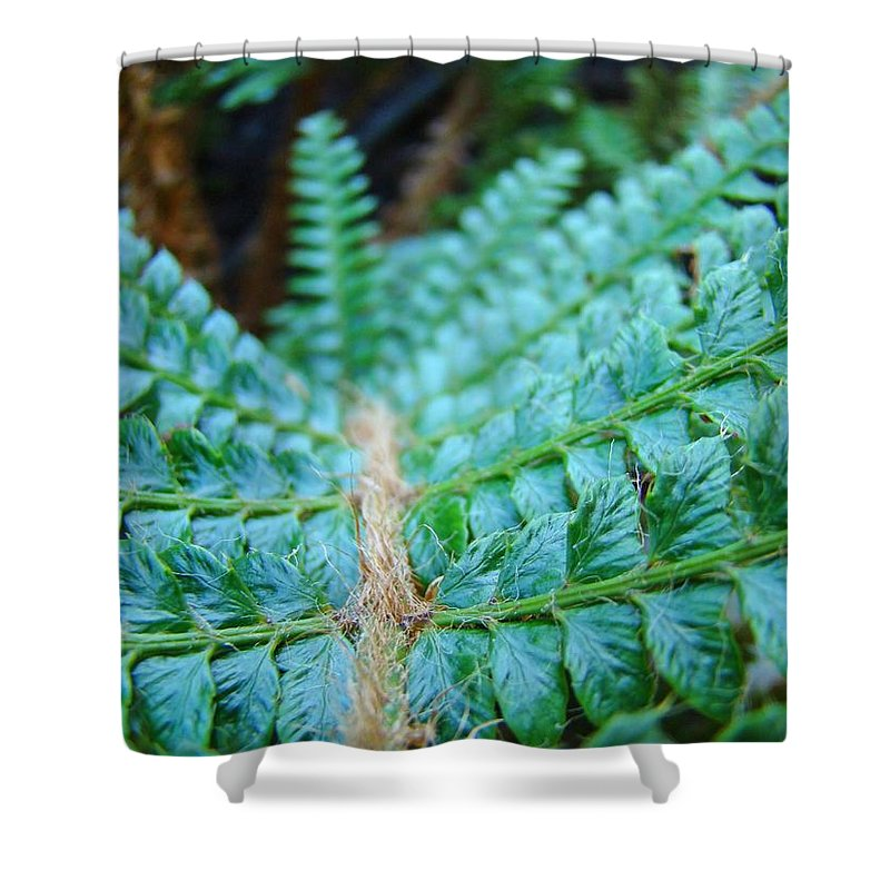 Fern Shower Curtain featuring the photograph Green Nature Forest Fern Art Print Baslee Troutman by Baslee Troutman