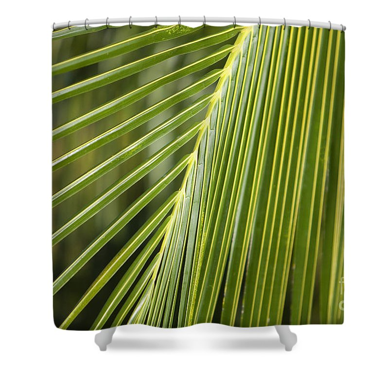 Angle Shower Curtain featuring the photograph Green Palm Leaf by Ron Dahlquist - Printscapes