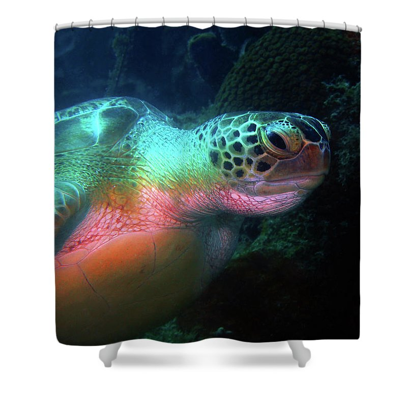 Green Sea Turtle Shower Curtain featuring the photograph Green Sea Turtle 1 by Pauline Walsh Jacobson