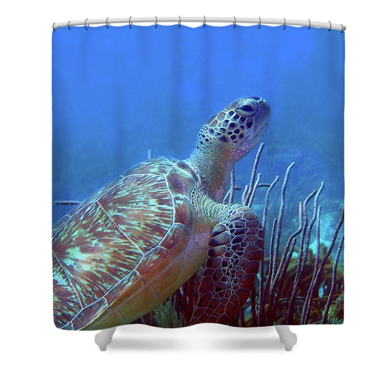 Green Sea Turtle Shower Curtain featuring the photograph Green Sea Turtle 3 by Pauline Walsh Jacobson