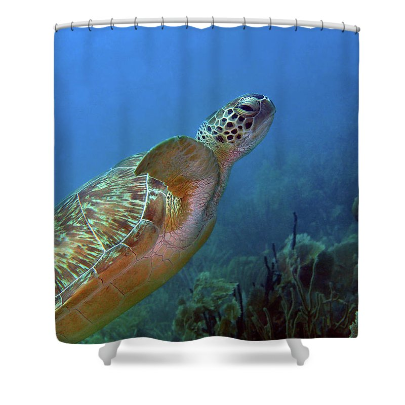 Green Sea Turtle Shower Curtain featuring the photograph Green Sea Turtle 4 by Pauline Walsh Jacobson