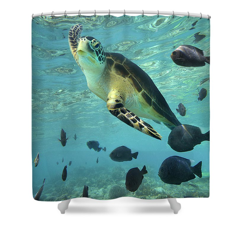 00451420 Shower Curtain featuring the photograph Green Sea Turtle Balicasag Island by Tim Fitzharris