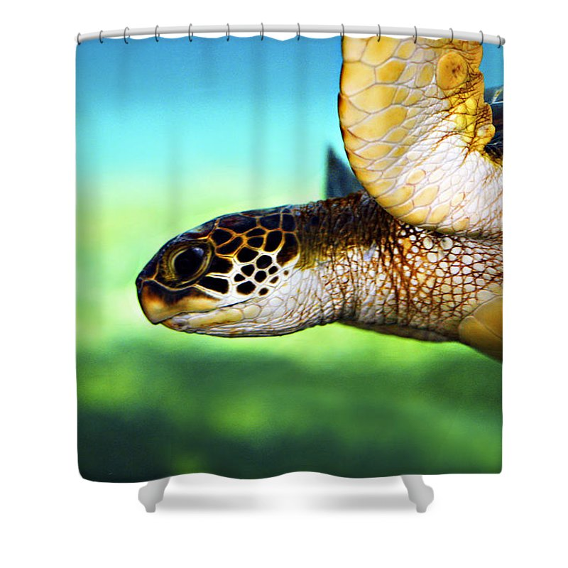 Green Shower Curtain featuring the photograph Green Sea Turtle by Marilyn Hunt