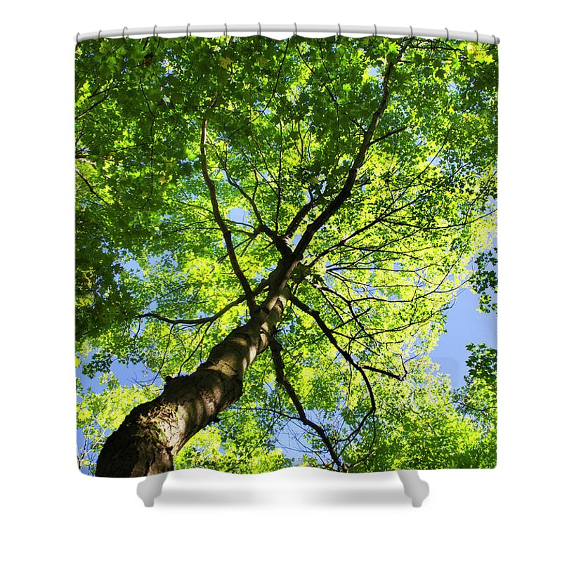 Tree Shower Curtain featuring the photograph Summer Tree Canopy by Christina Rollo