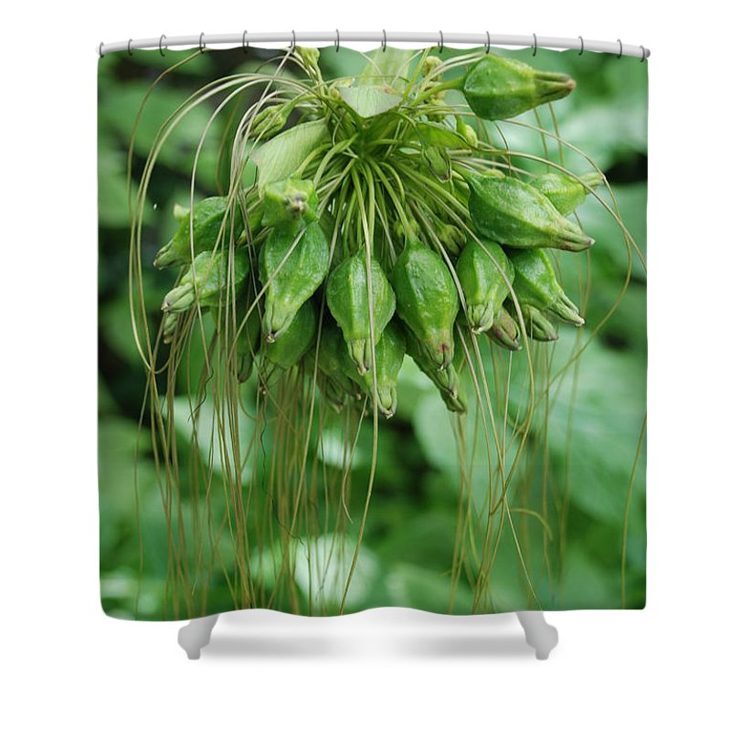 Macro Shower Curtain featuring the photograph Green Vines by Rob Hans
