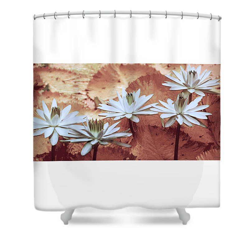 Flowers Shower Curtain featuring the photograph Greeting The Day by Holly Kempe