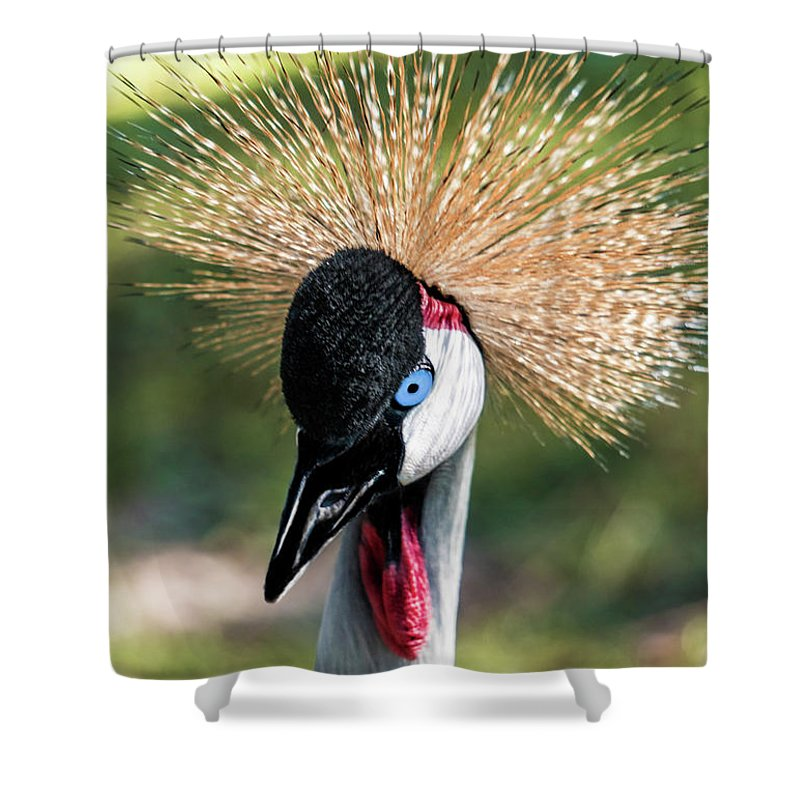 Gulf Shower Curtain featuring the photograph Grey Crowned Crane Gulf Shores Al 2041 by Ricardos Creations