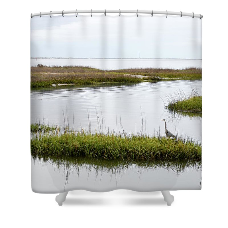 Avian Shower Curtain featuring the photograph Grey Heron #1 by Tim Bond