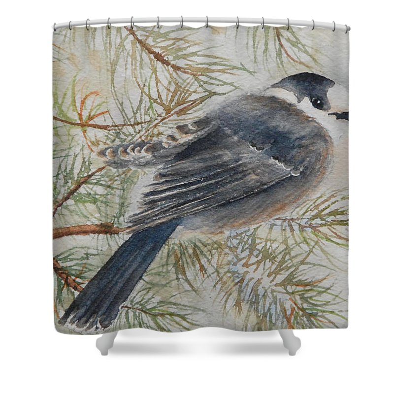 Bird Shower Curtain featuring the painting Grey Jay by Ruth Kamenev