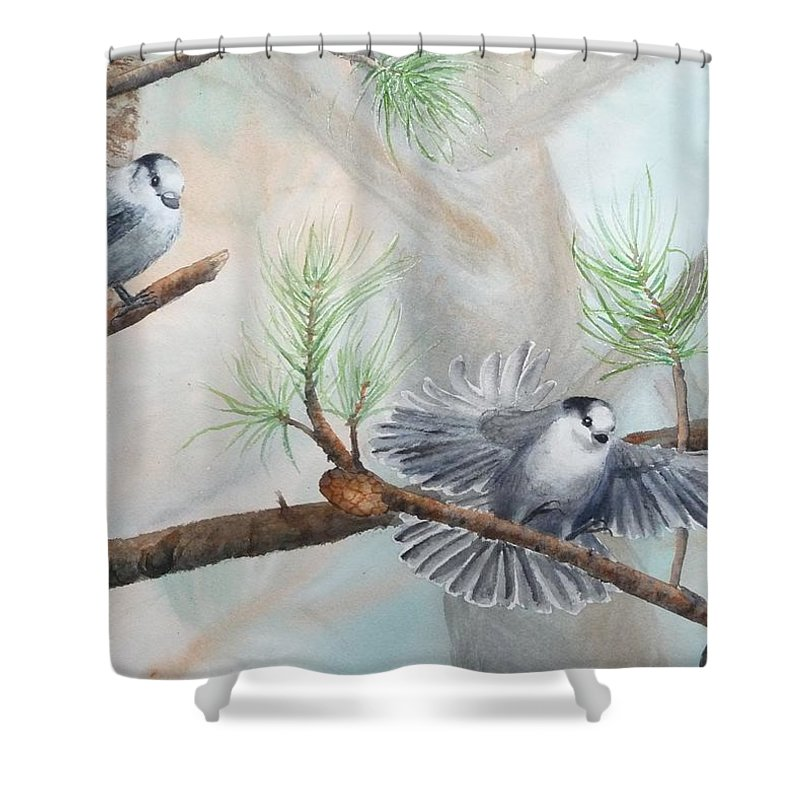 Grey Jay Shower Curtain featuring the painting Grey Jays In A Jack Pine by Ruth Kamenev