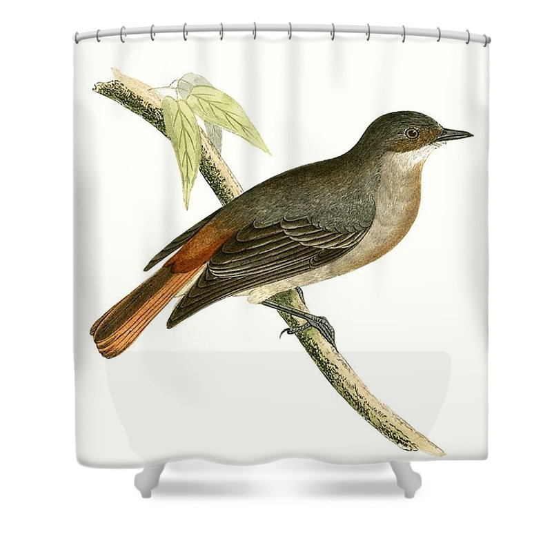 Bird Shower Curtain featuring the painting Grey Redstart by English School