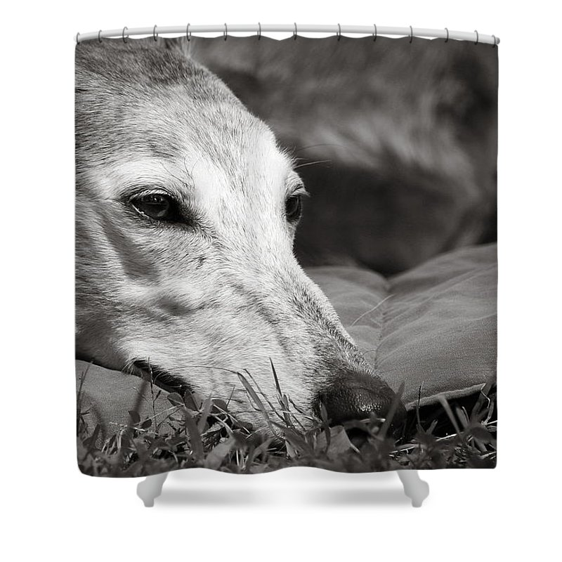 Editorial Shower Curtain featuring the photograph Greyful by Angela Rath