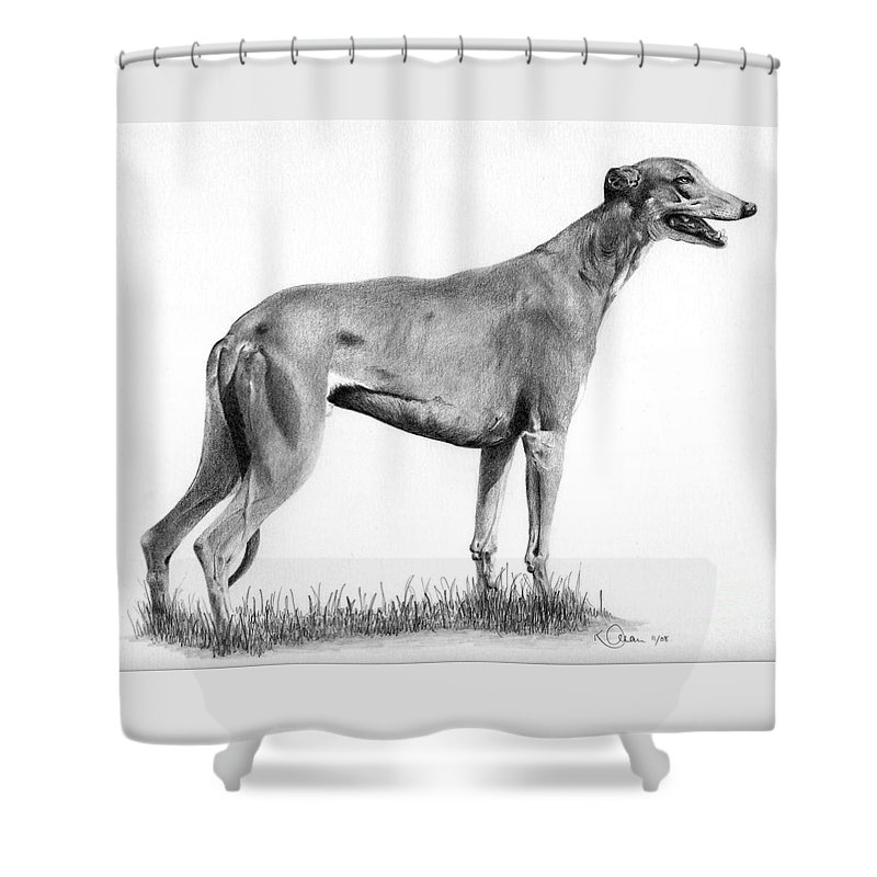 Dog Shower Curtain featuring the drawing Greyhound by Karen Townsend